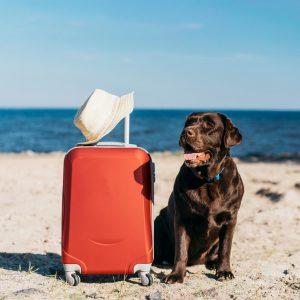 in viaggio con i cani consigli