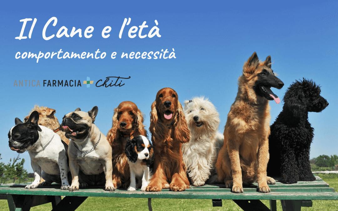 Il cane e l'età: comportamento e necessità