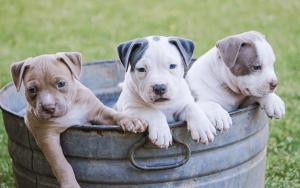 cuccioli e addestramento