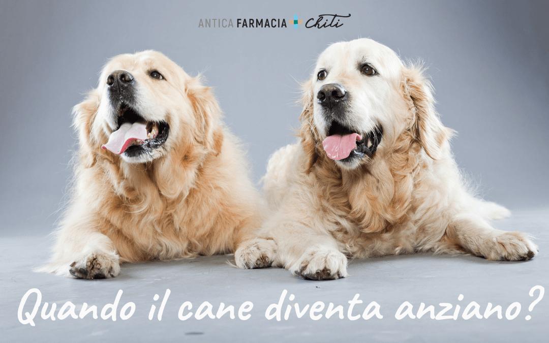 Quando il cane diventa anziano