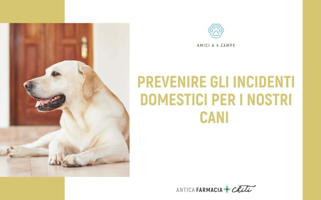 Prevenire gli incidenti domestici per i nostri cani