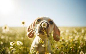 primavera con i nostri cani - cane in un campo di margherite