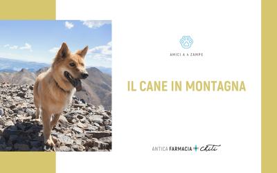 Vacanze: il cane in montagna