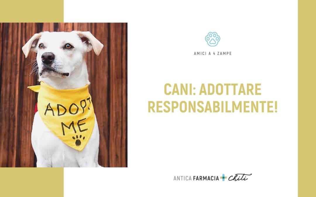 Adottare un cane responsabilmente!
